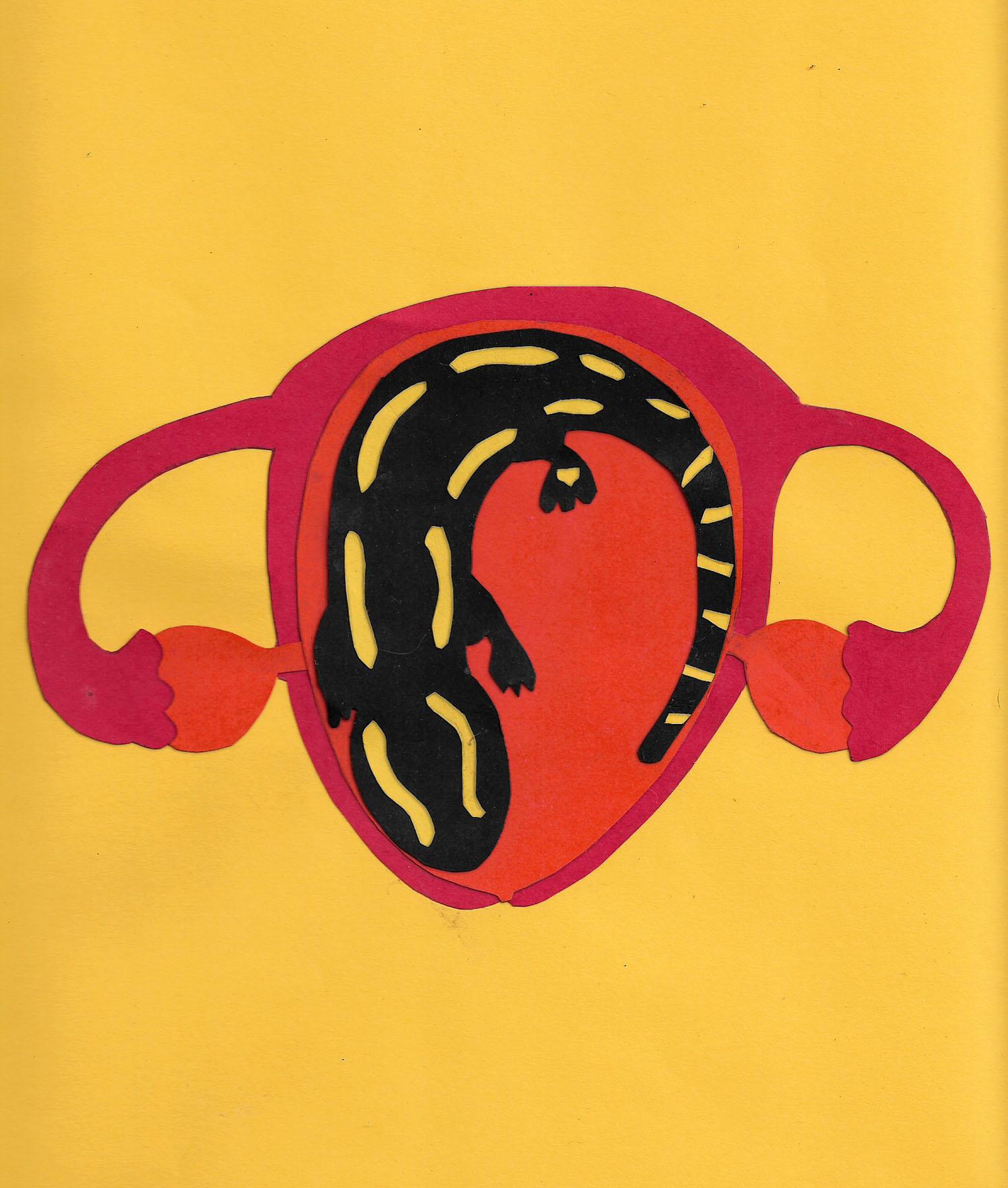 salamandra-02
